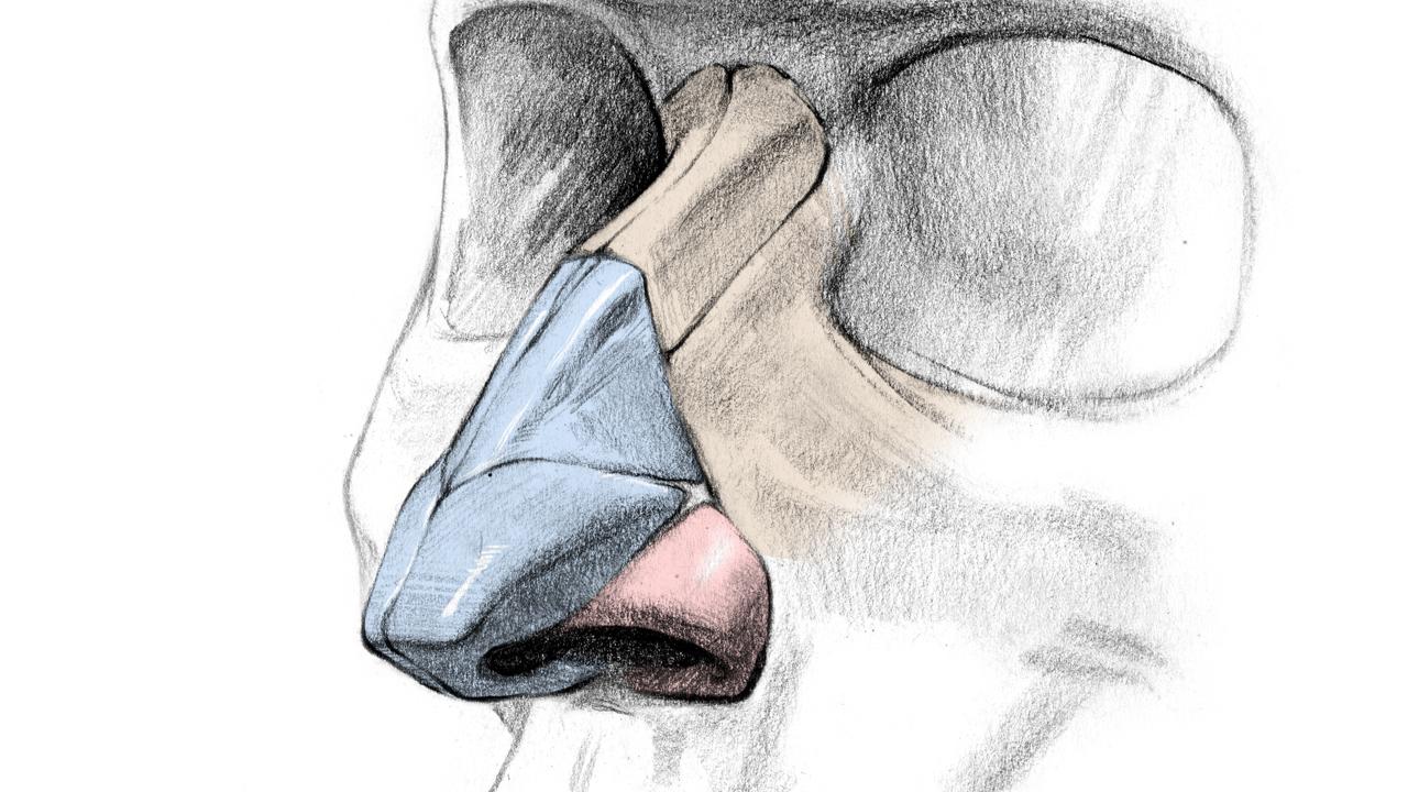 1280x720 How To Draw A Nose Anatomy And Structure Proko