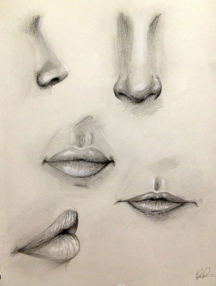 736x976 gallery pencil sketch eye nose lips