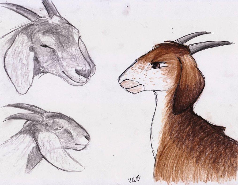 1015x787 Goat Character Design By Knufad Zzaj