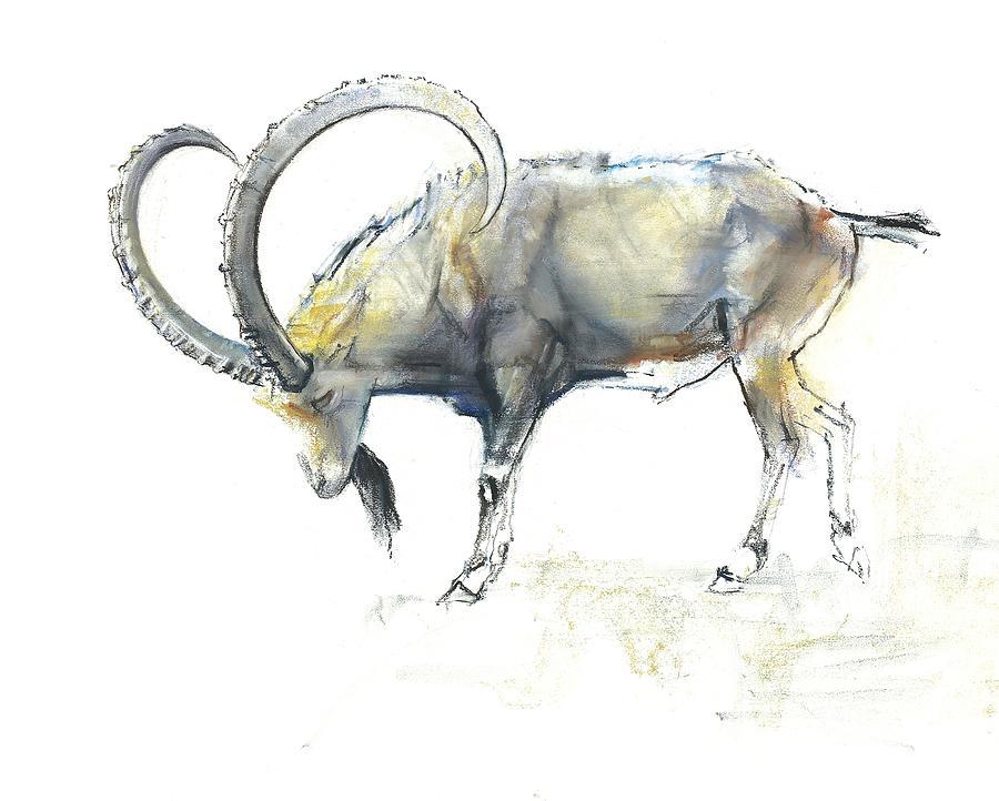 900x722 Nubian Ibex Painting By Mark Adlington