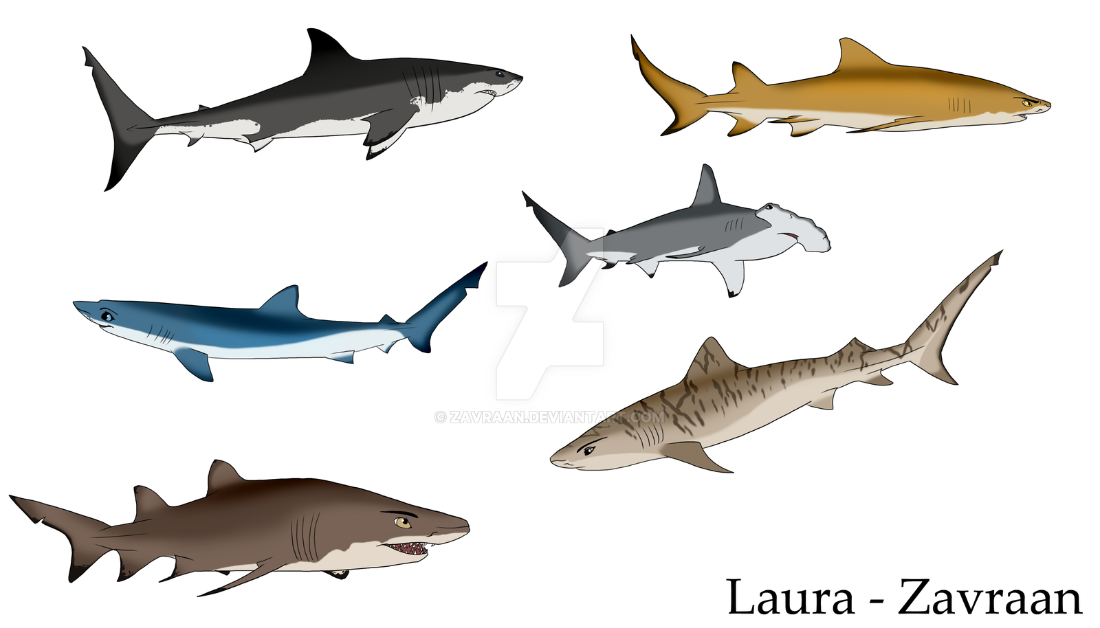 1600x914 Colored Sharks By Zavraan