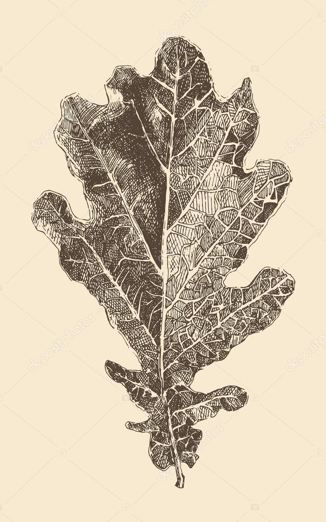 640x1024 Hand Drawn Oak Leaf Stock Vector Grop
