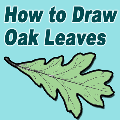 400x400 How To Draw Oak Leaves With Step By Step Drawing Lessons