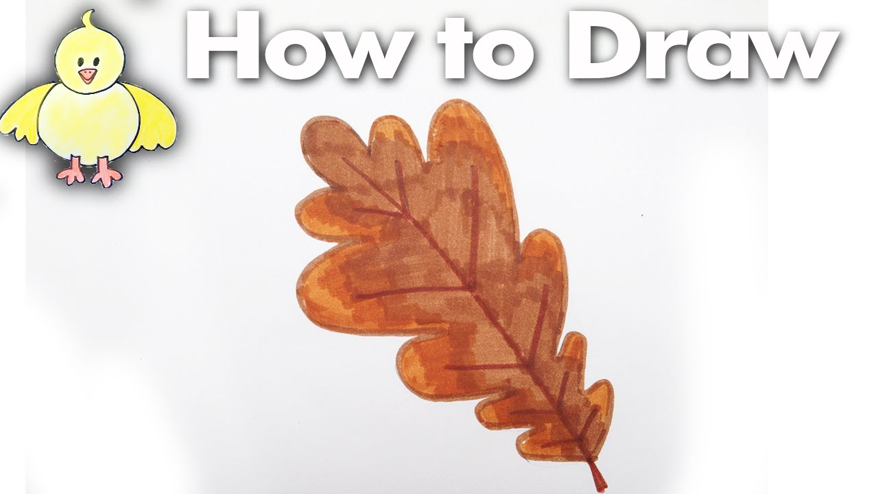 1280x720 How To Draw An Easy Oak Leaf Step By Step