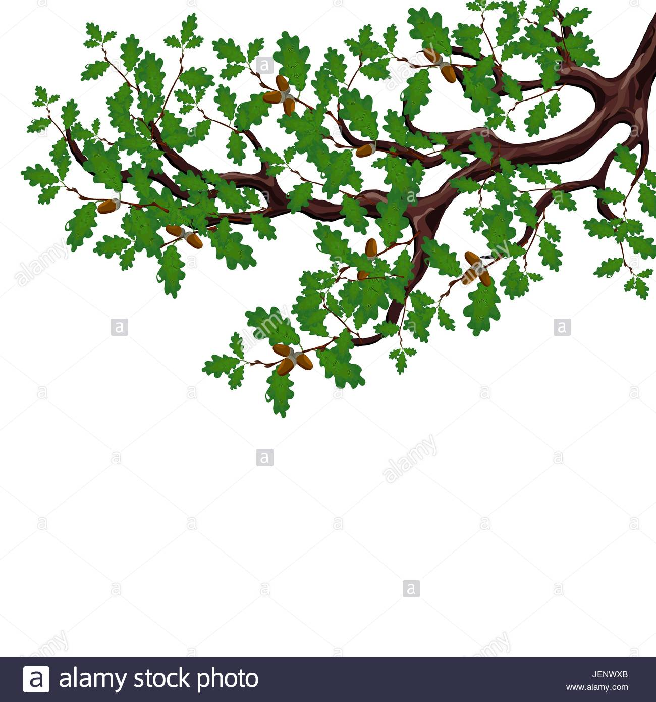 1300x1390 A Green Branch Of A Large Oak Tree With Acorns. Volumetric Drawing