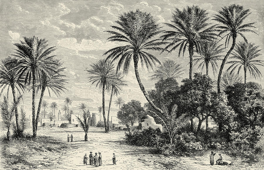 900x580 Oasis Of Gafsa Tunis Drawing By Charles Brabant