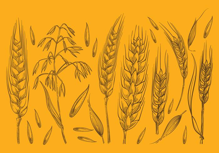 700x490 Hand Drawn Oat Sketches