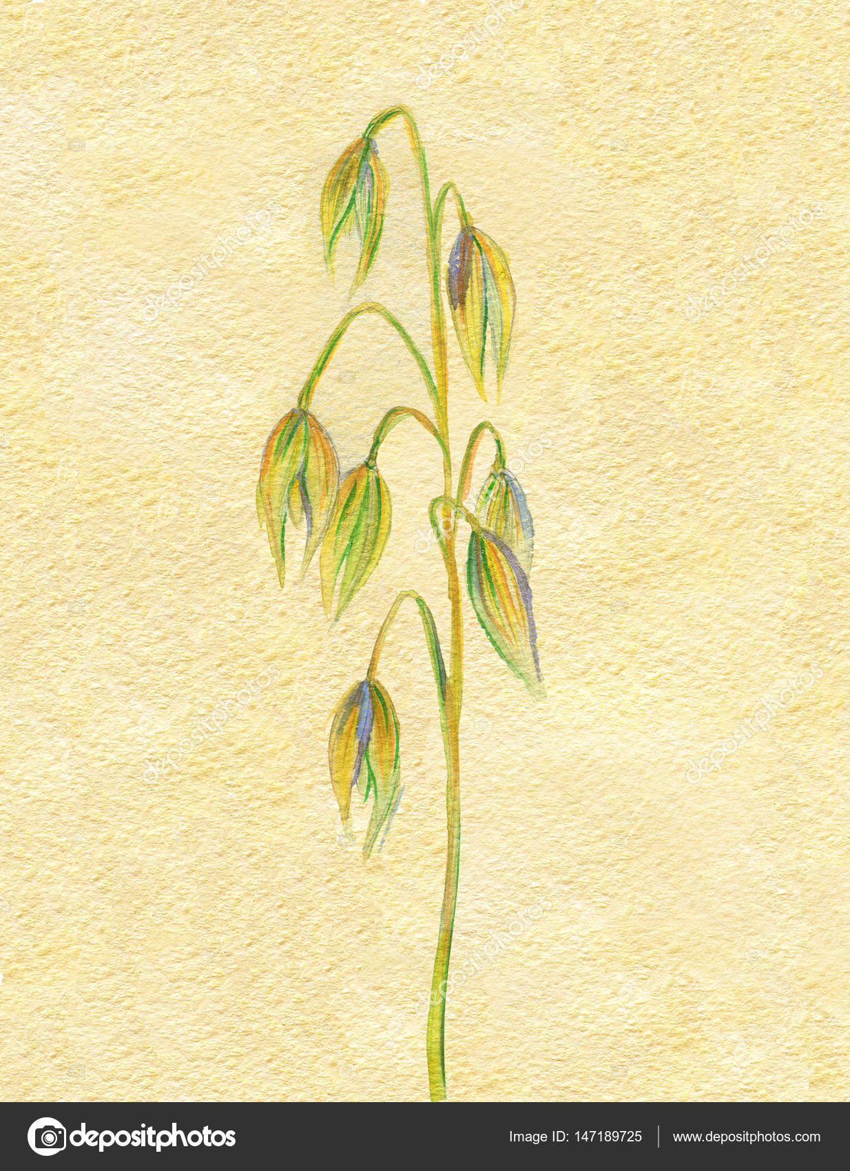 1234x1700 Hand Drawing Watercolor Illustration Of Oat Spring Autumn