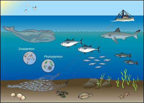 467x332 Drawn Ocean Marine Ecosystem