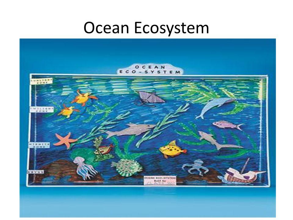 960x720 Ecosystem Diorama Project