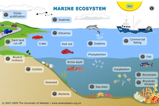 509x339 Explore This Interactive Diagram To Learn More About Life In