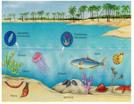472x366 Marine Biomes