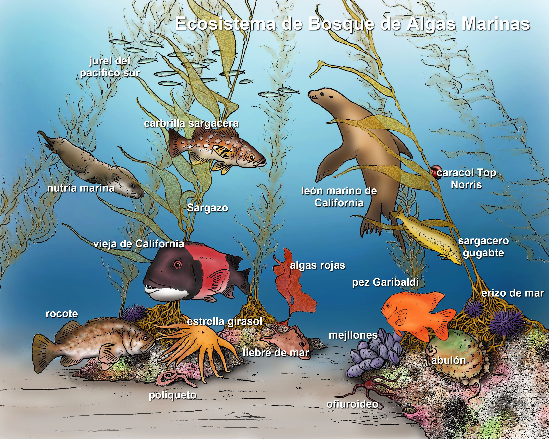 3000x2400 Marine Ecosystems Marine Ecosystem, Marines And Illustrations