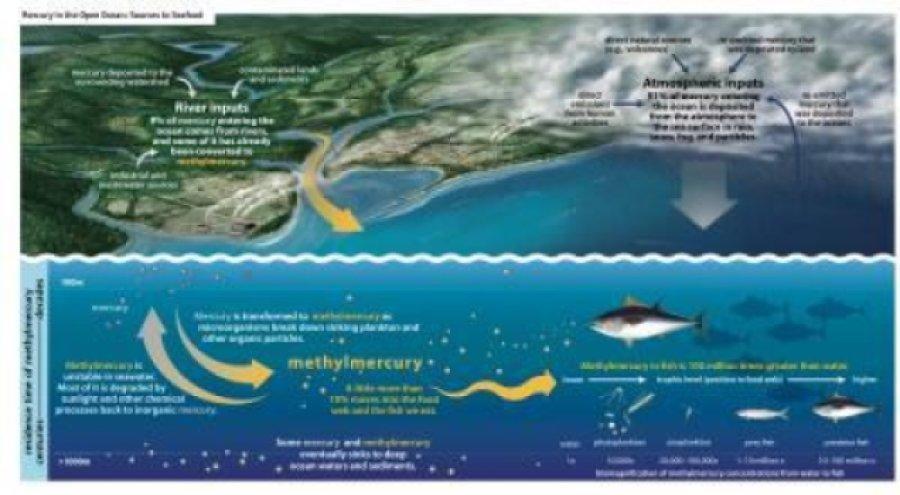 900x495 Mercury Releases Contaminate Ocean Fish New Research Important