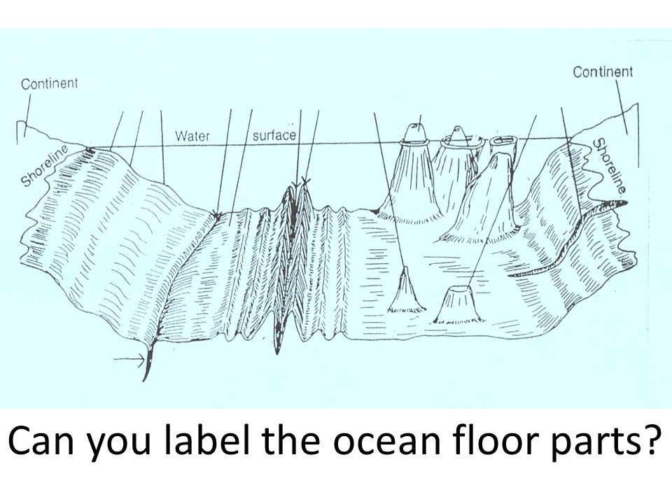 Sea Floor Diagram Labeled Search For Wiring Diagrams