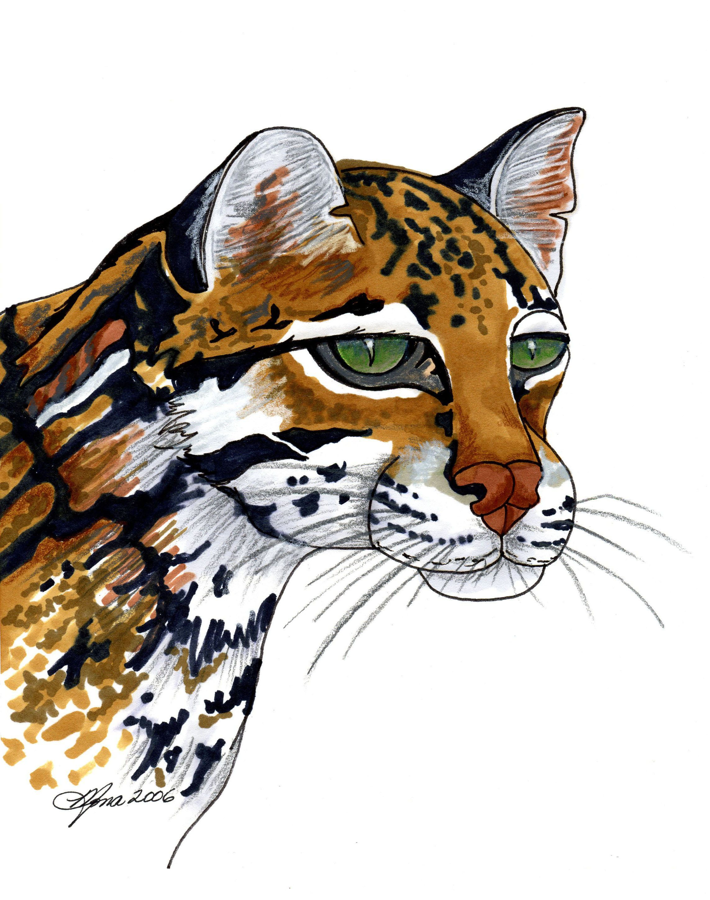 2286x2900 Ocelot. Monart Intermediate Drawing Project. This Project Has