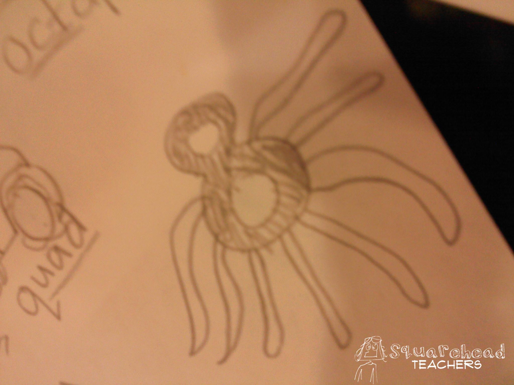 2048x1536 Octopus Squarehead Teachers