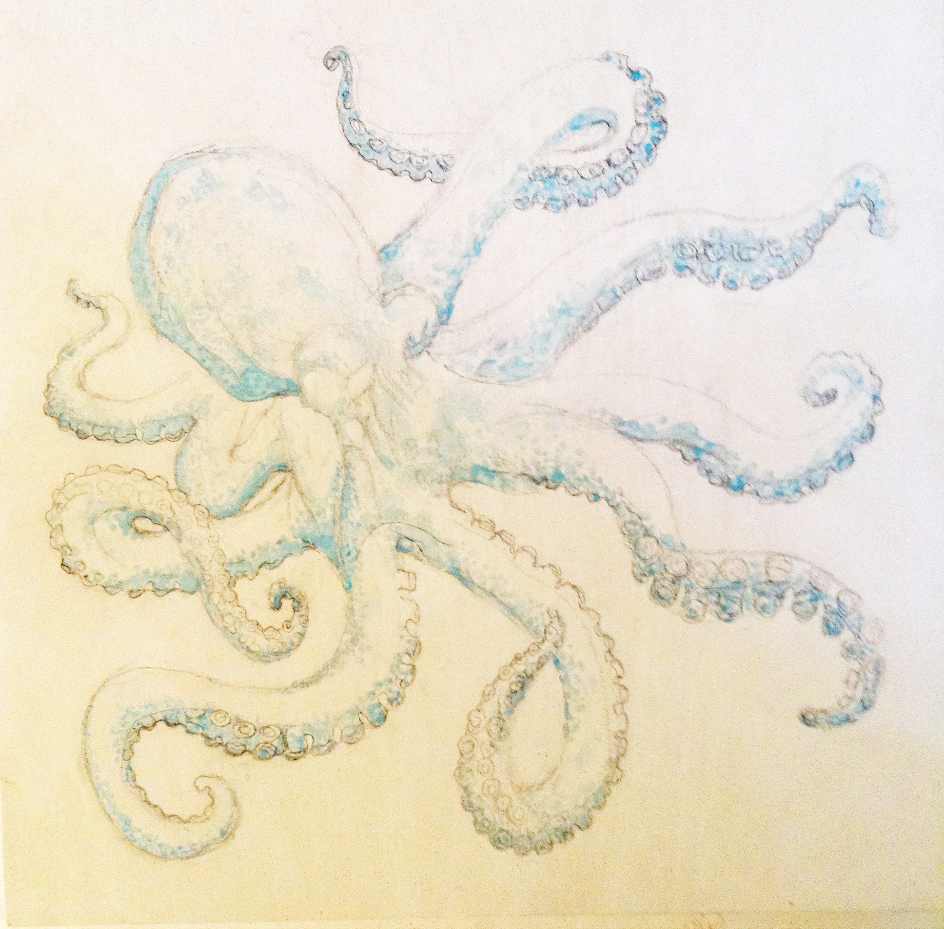 1936x1906 How To Paint An Octopus With Acrylic