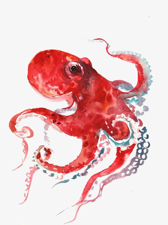 564x754 Octopus, Hand Drawn Octopus, Cartoon Octopus, Drawing Octopus Png
