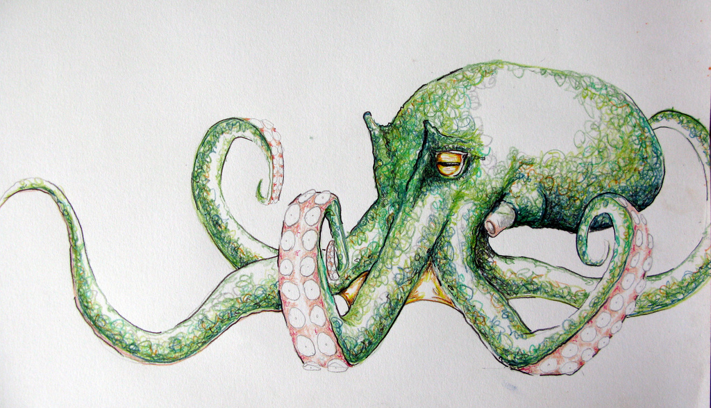 1024x587 Octopus Drawing By Stephen Gray Stephen Gray