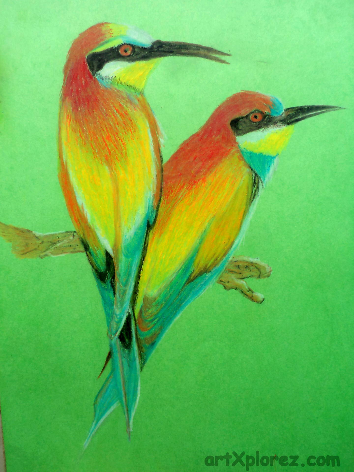 1440x1920 Drawing Birds Using Oil Pastels Artxplorez