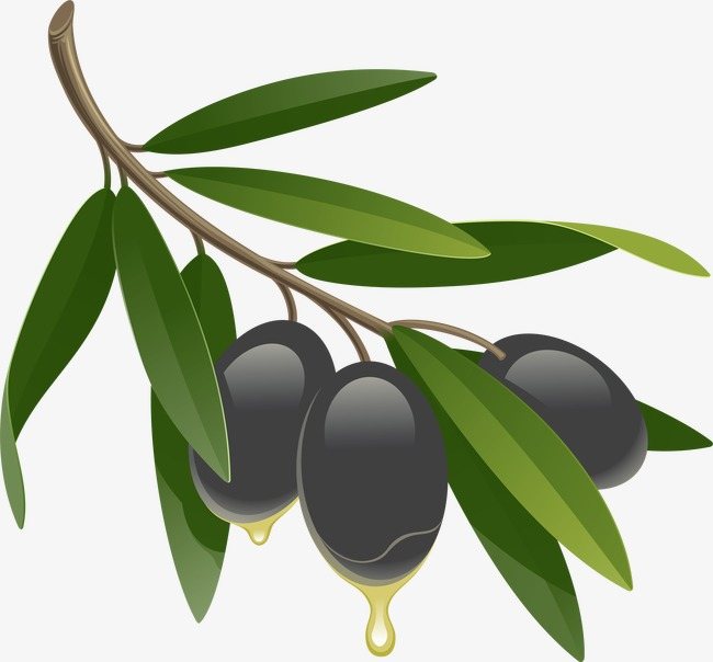 650x604 Drawing Black Olives, Black Olive, Food, Ingredients Png Image
