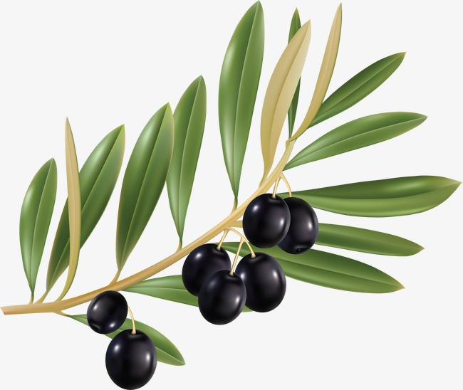 650x548 Drawing Olive Decorative Material, Black Olive, Food, Ingredients
