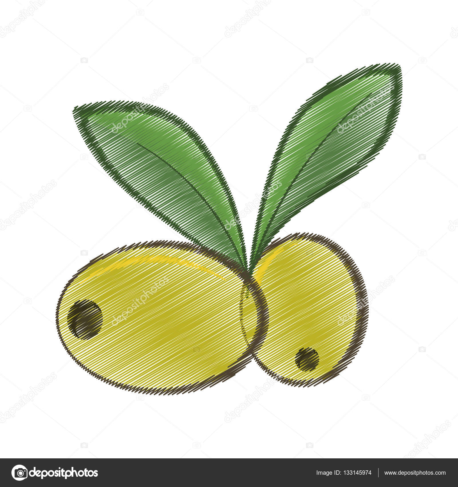 1600x1700 Drawing Two Green Olive Leafs Organic Food Stock Vector Djv