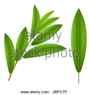 300x320 Dove With Olive Leaf Drawing Stock Photo 169672868