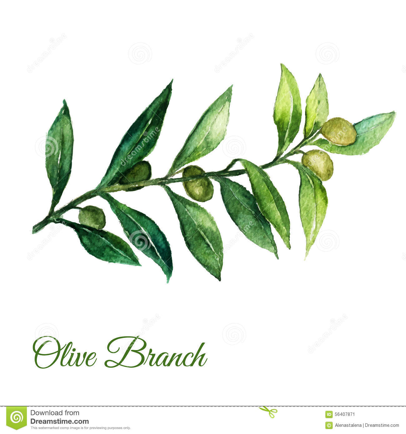 Olive Leaf Drawing at GetDrawings.com | Free for personal use Olive ...