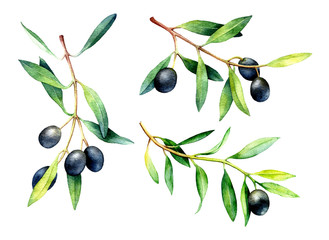 329x240 Search Photos Category Plants And Flowers Gt Trees Gt Olive Tree