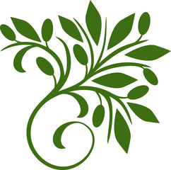 242x240 Olive Leaf Photos, Royalty Free Images, Graphics, Vectors