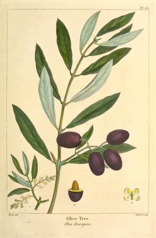 497x760 9 Best Olive Oil Images On Olive Oil, Olive Oils