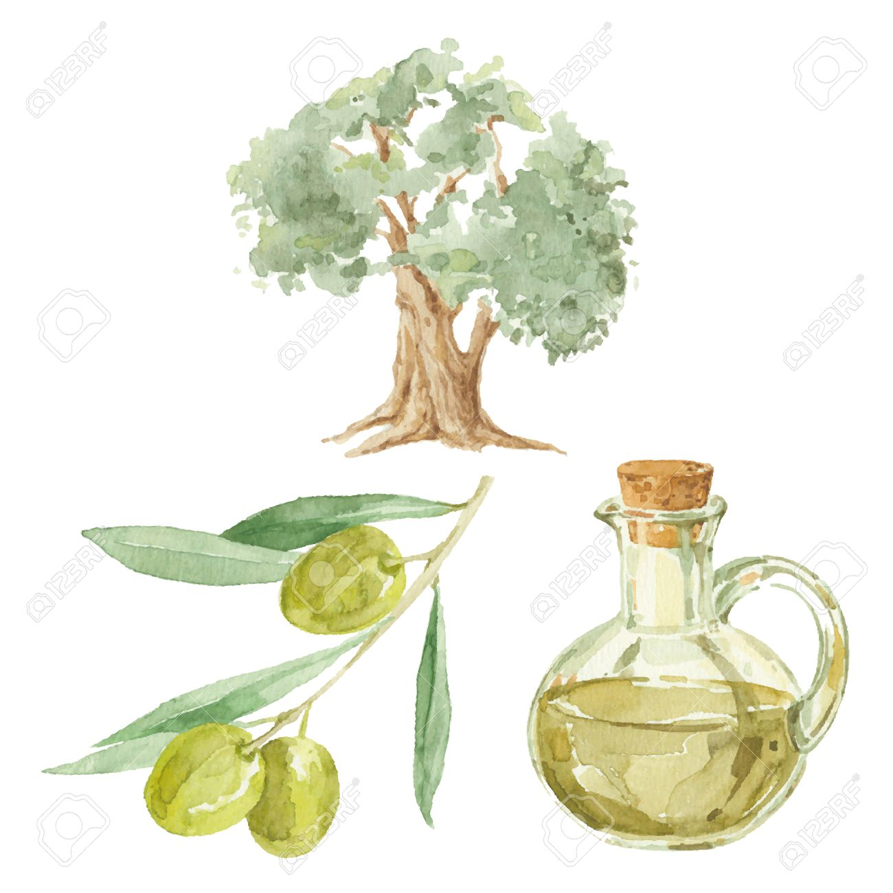 1300x1300 Olive Branch, Tree And A Bottle Of Olive Oil Drawing By Watercolor