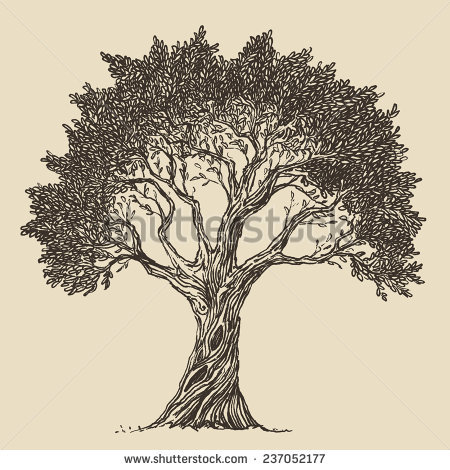 Olive tree drawing at getdrawings free for personal use olive 450x470 drawn tree vintage altavistaventures Gallery