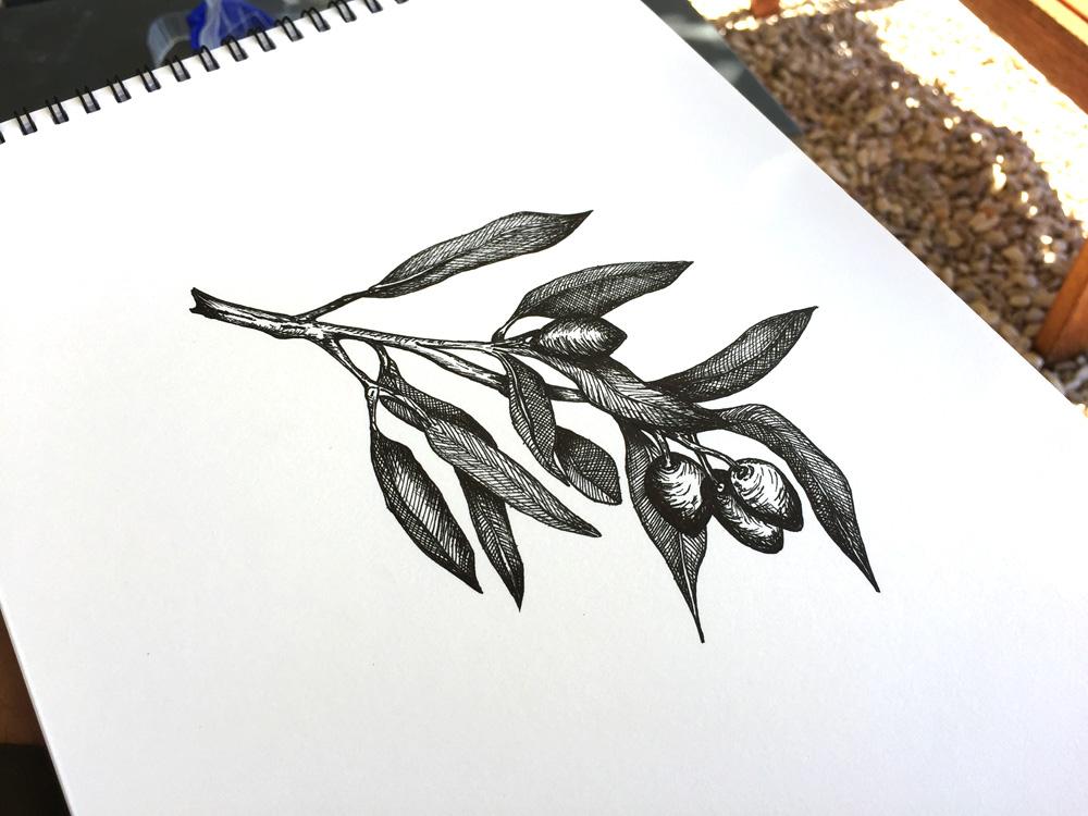 1000x750 Olive Tree Pen Sketch Olive Branch Illustration Olives Drawing