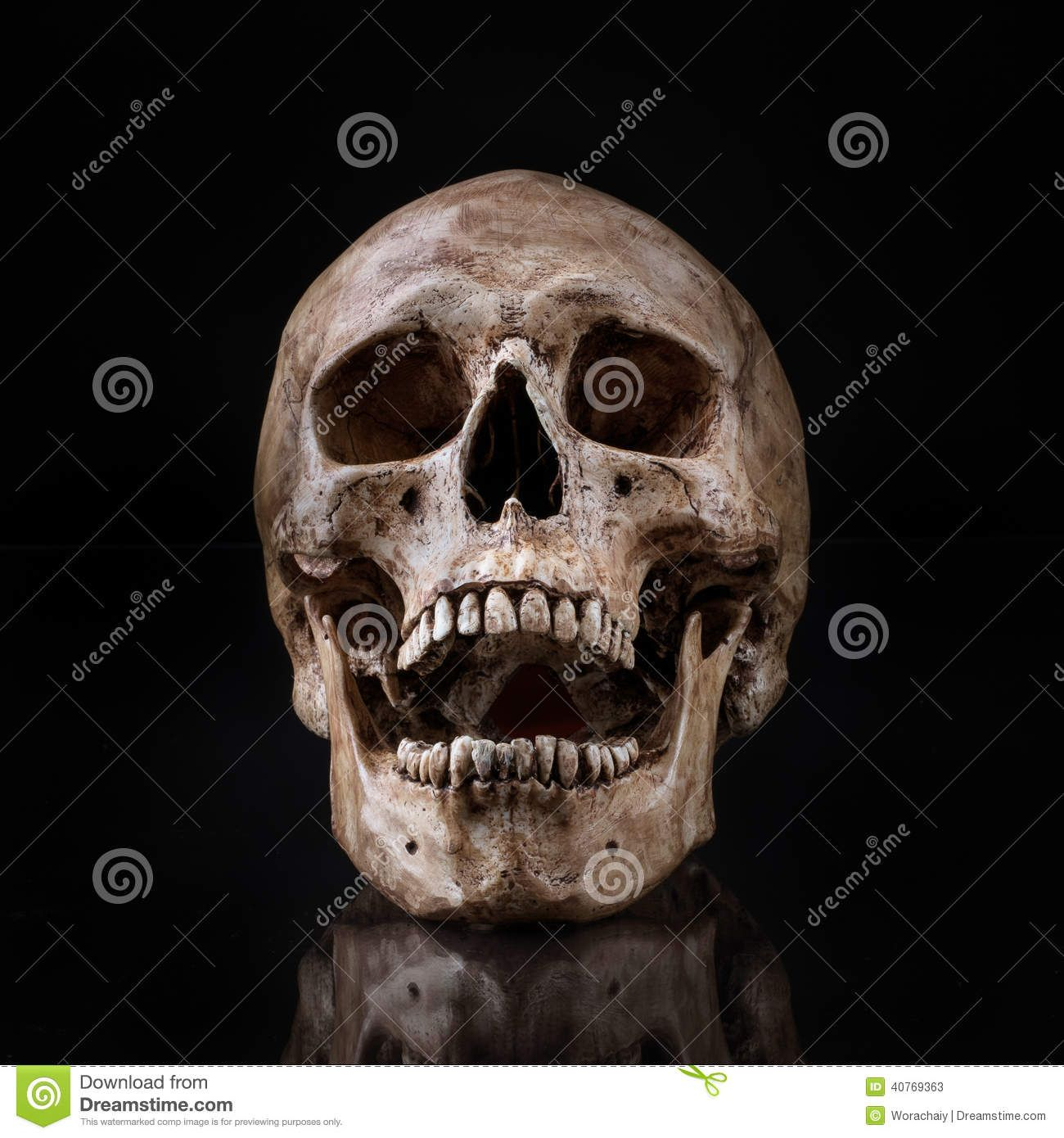 1300x1390 Human Skull Front Jaw Open