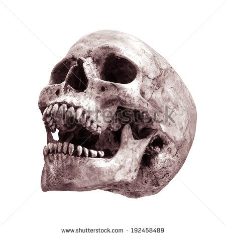 450x470 Human Skull Open Mouth