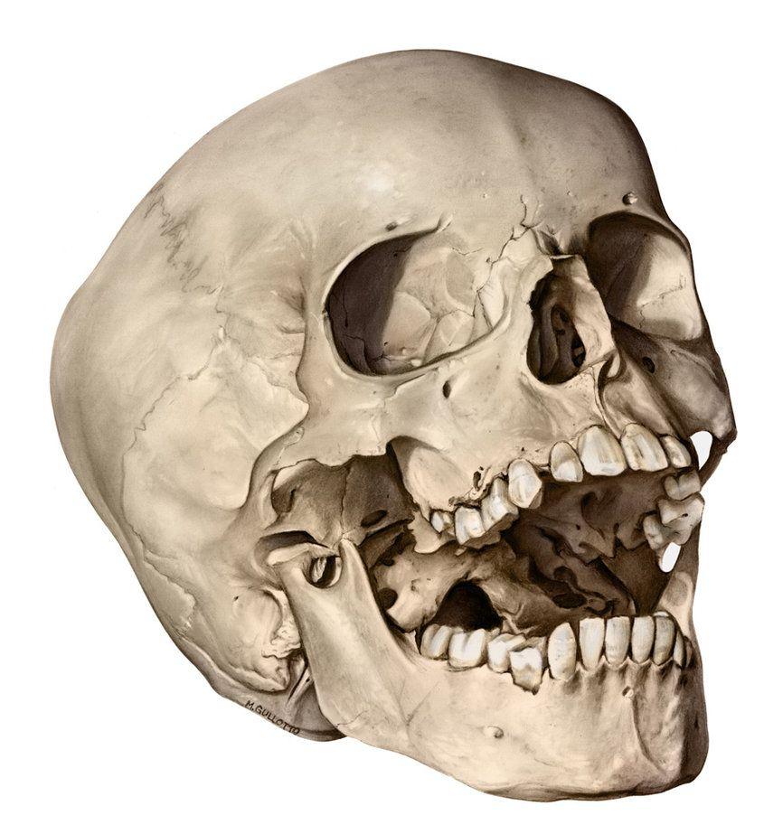 866x923 Macrabe Skulls Skull Fast Sketch Penerari Traditional Art