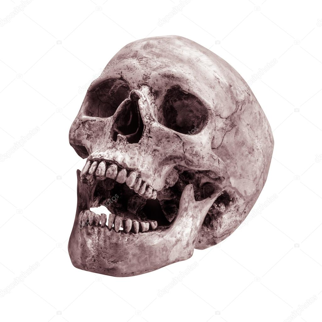 1024x1024 Sidetview Human Skull Open Mouth Isolated Stock Photo Worac