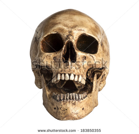 450x433 Skull Looking Up Mouth Open