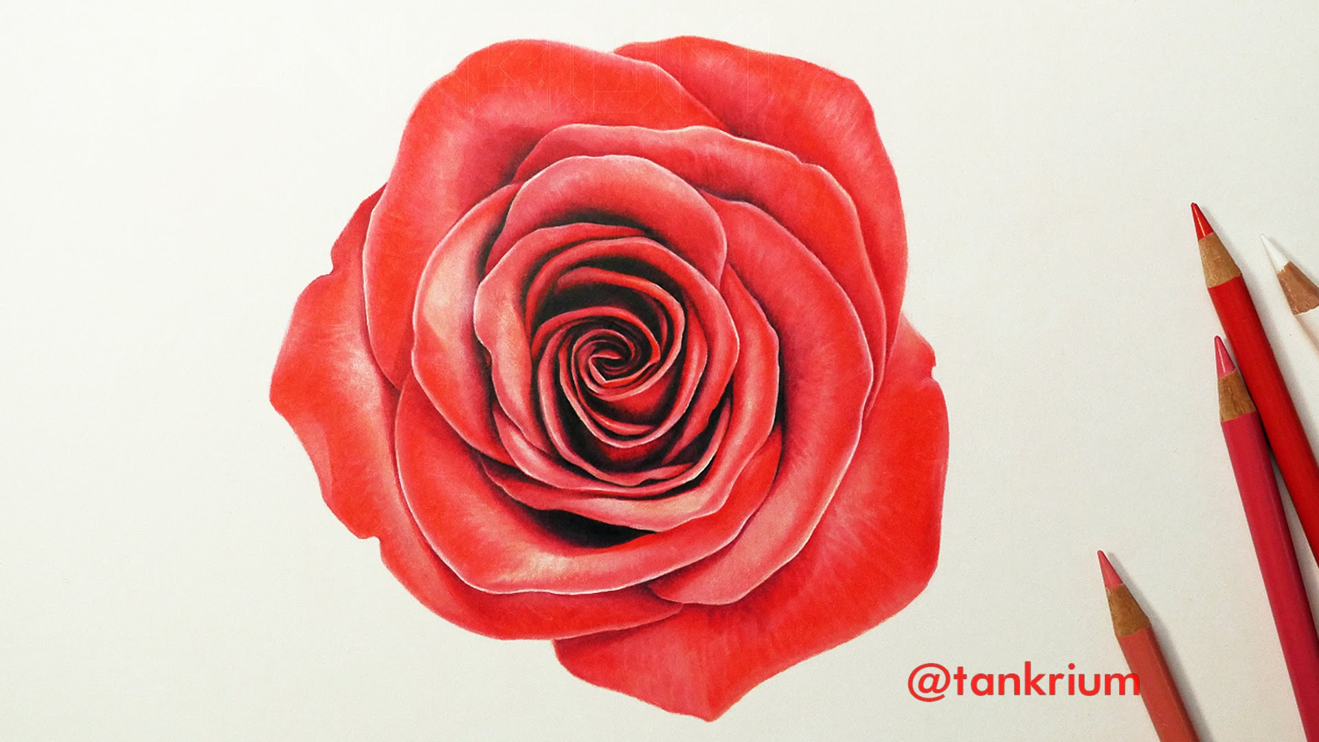 1920x1080 Drawing A Rose (How To Draw A Realistic Rose) Time Lapse Drawing