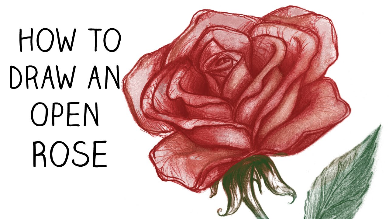 1280x720 How To Draw An Open Rose