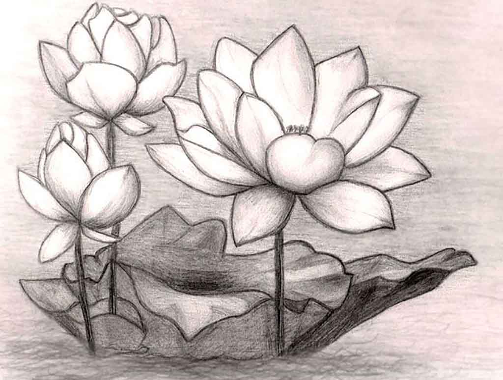 1024x774 Pencil Drawing Of A Flower Realistic Drawing Of A Flower How