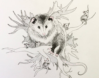 The Best Free Opossum Drawing Images Download From 50 Free Drawings