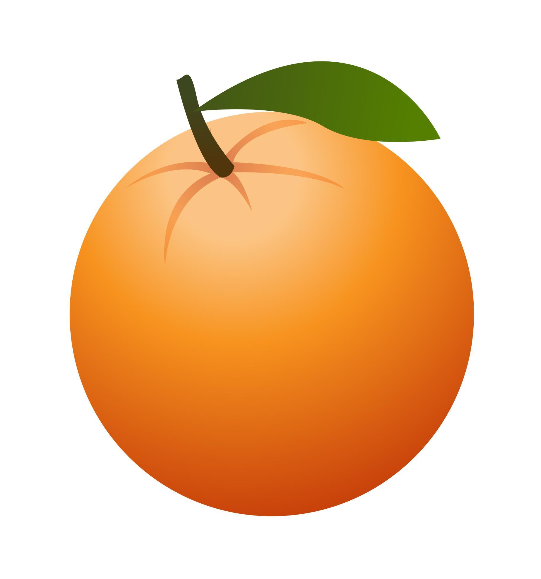 Orange Fruit Drawing at GetDrawings.com | Free for personal use ... for Drawing Orange Fruit  67qdu