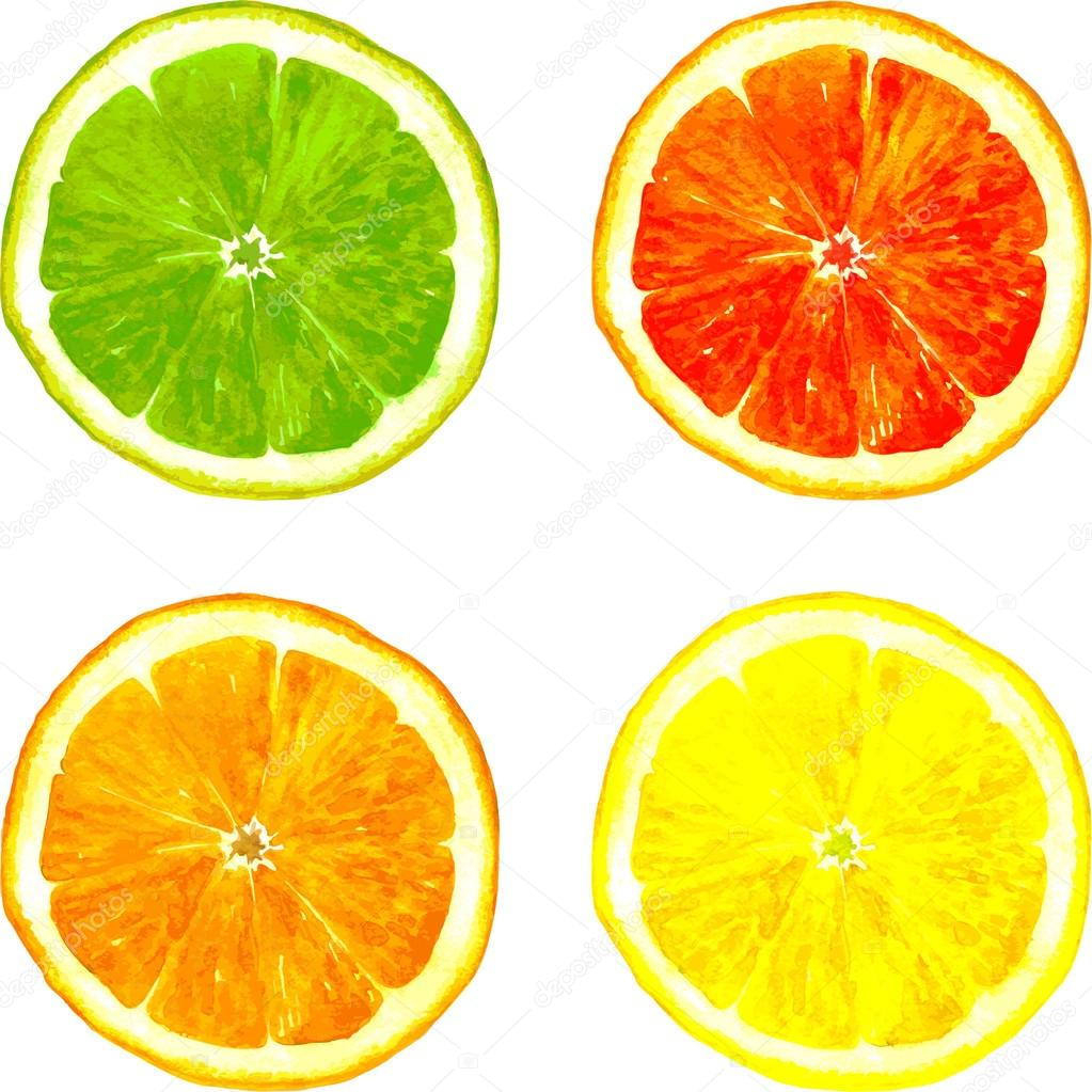 1023x1023 Slice Of Citrus Fruits Drawing By Watercolor Stock Vector
