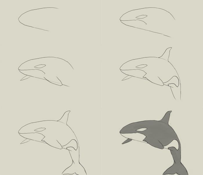 700x605 How To Draw A Killer Whale Step By Step Craftsdiy