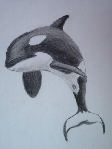 375x500 Killer Whale By Orcaya