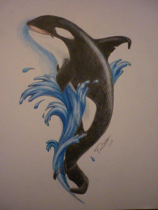 540x720 Orca Drawing , Color Pencil Drawings Draw, Drawing